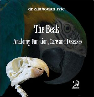 THE BEAK - ANATOMY,FUNCTION,CARE AND DISEASES